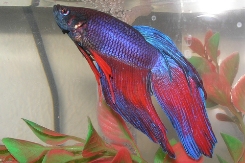 It s been a good life john fischer the catch for How long can a betta fish live