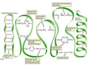 Plant physiology: brilliant