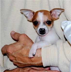 Eloise as a puppy.