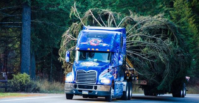 Mack-Pinnacle-hauling-Capitol-Christmas-tree